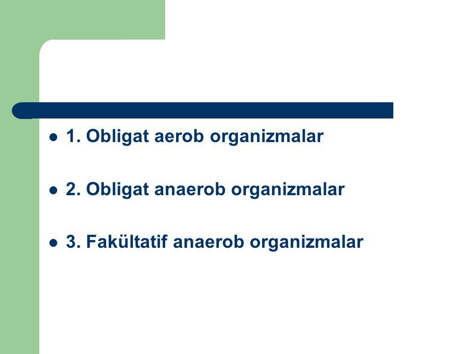 1. Obligat aerob organizmalar