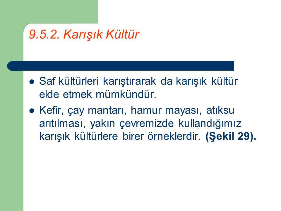 9.5.2. Karışık Kültür Saf kültürleri karıştırarak da karışık kültür elde etmek mümkündür.