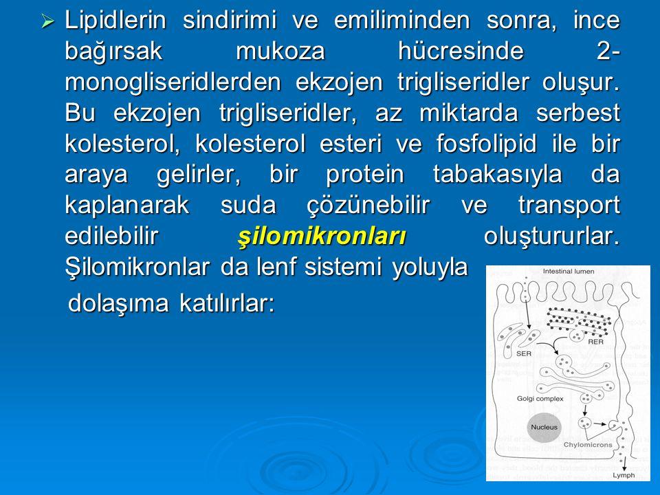 Lipidlerin sindirimi ve emiliminden sonra, ince bağırsak mukoza hücresinde 2-monogliseridlerden ekzojen trigliseridler oluşur. Bu ekzojen trigliseridler, az miktarda serbest kolesterol, kolesterol esteri ve fosfolipid ile bir araya gelirler, bir protein tabakasıyla da kaplanarak suda çözünebilir ve transport edilebilir şilomikronları oluştururlar. Şilomikronlar da lenf sistemi yoluyla