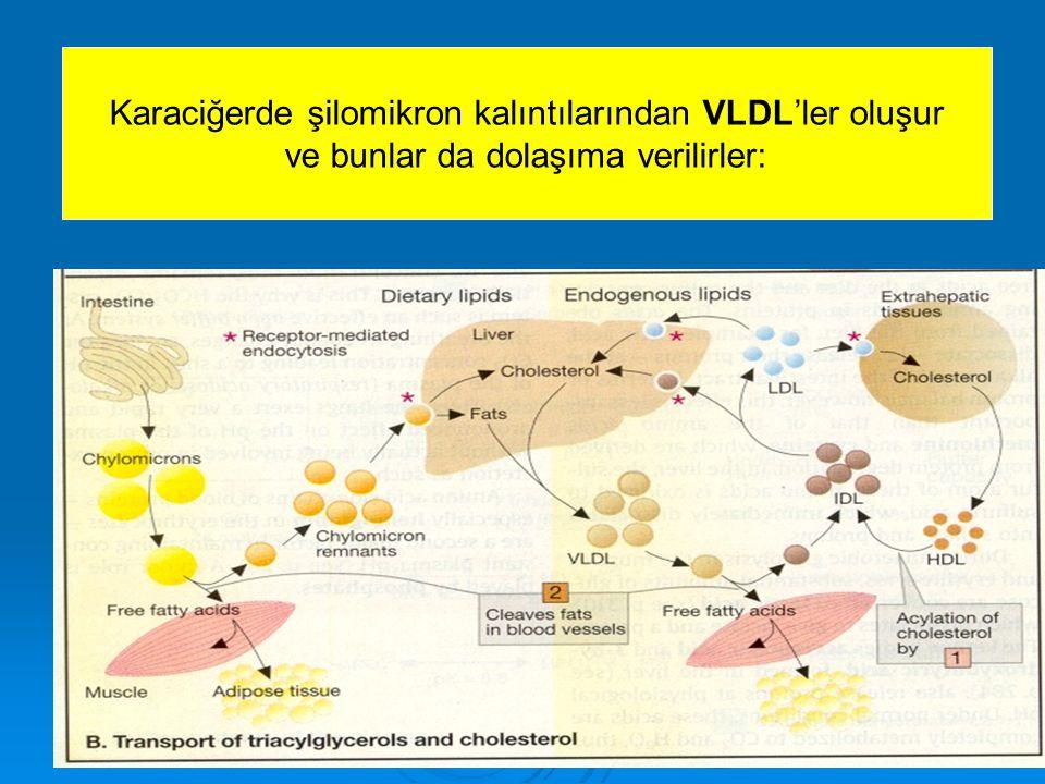 Karaciğerde şilomikron kalıntılarından VLDL'ler oluşur