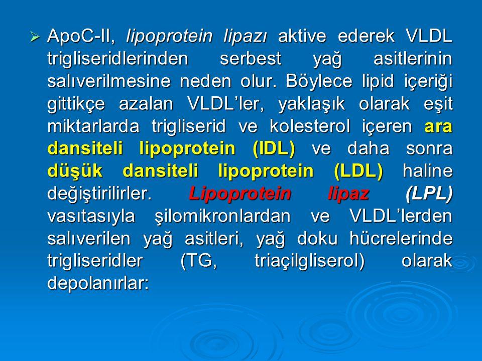 ApoC-II, lipoprotein lipazı aktive ederek VLDL trigliseridlerinden serbest yağ asitlerinin salıverilmesine neden olur.