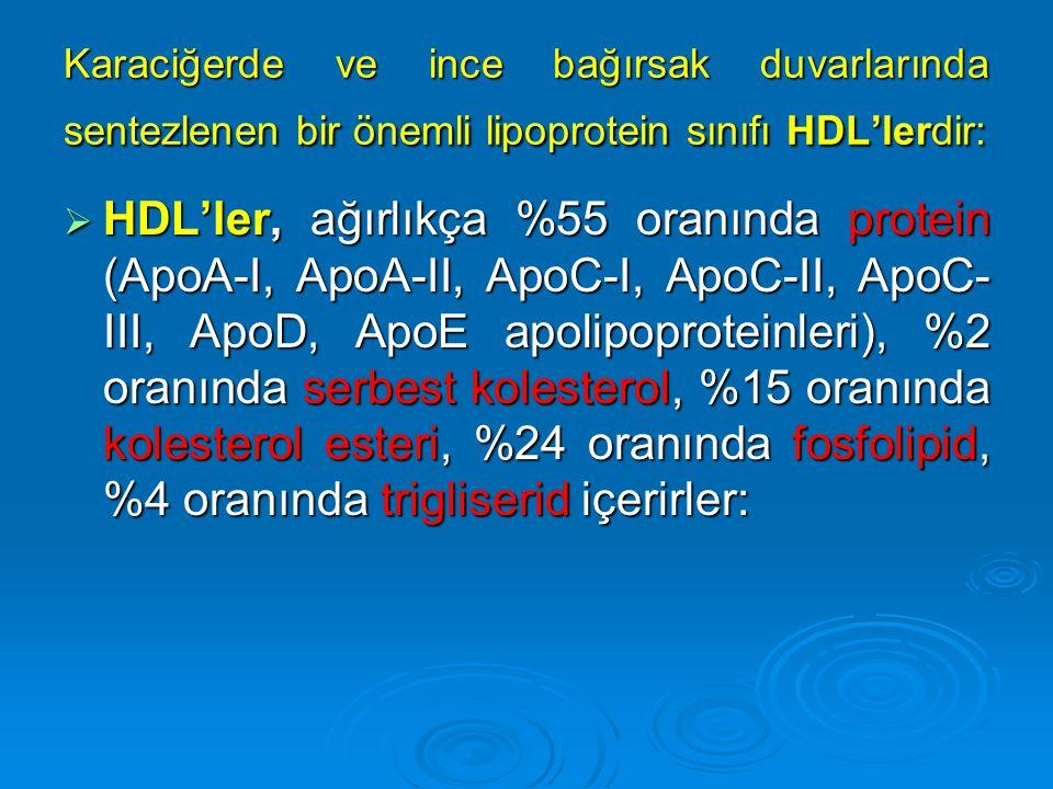 Karaciğerde ve ince bağırsak duvarlarında sentezlenen bir önemli lipoprotein sınıfı HDL'lerdir: