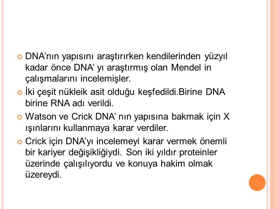 DNA'nın yapısını araştırırken kendilerinden yüzyıl kadar önce DNA' yı araştırmış olan Mendel in çalışmalarını incelemişler.