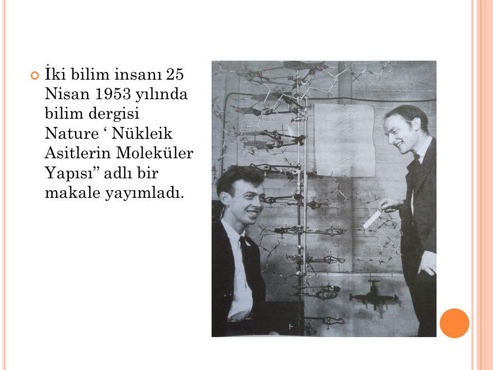 İki bilim insanı 25 Nisan 1953 yılında bilim dergisi Nature ' Nükleik Asitlerin Moleküler Yapısı'' adlı bir makale yayımladı.