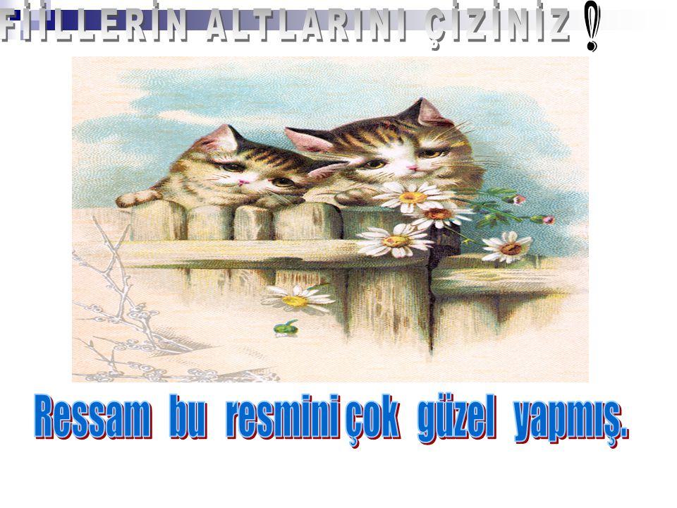 FİİLLERİN ALTLARINI ÇİZİNİZ