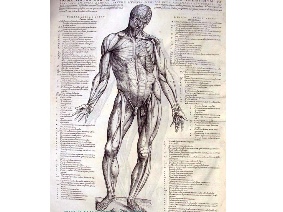 Vesalius s special.lib.gla.ac.uk/anatomy/vesalius.html