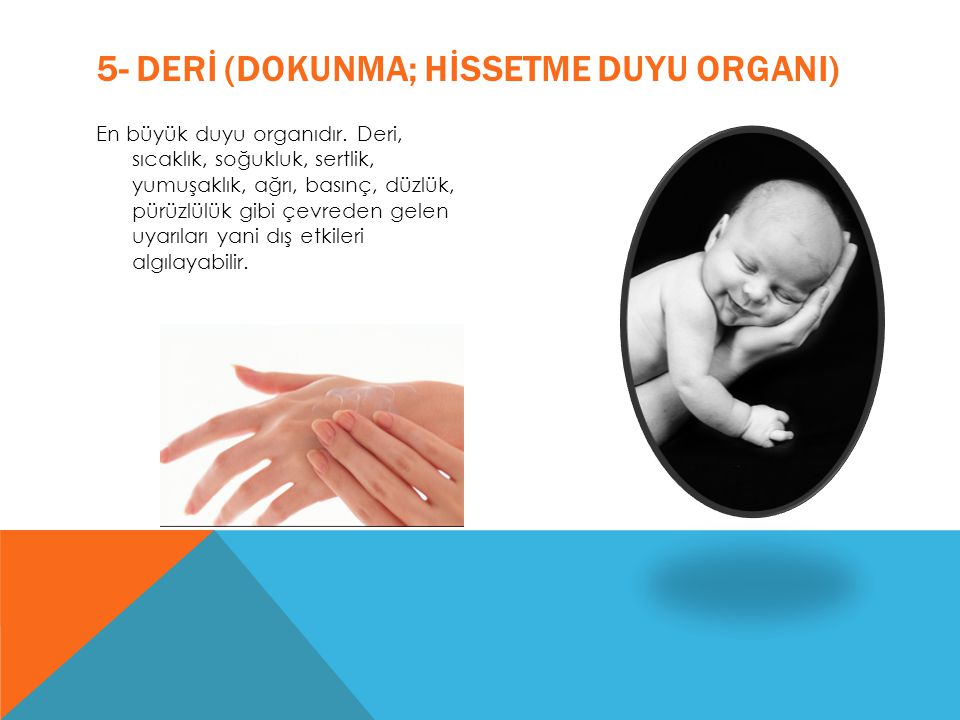 5- DERİ (DOKUNMA; HİSSETME DUYU ORGANI)