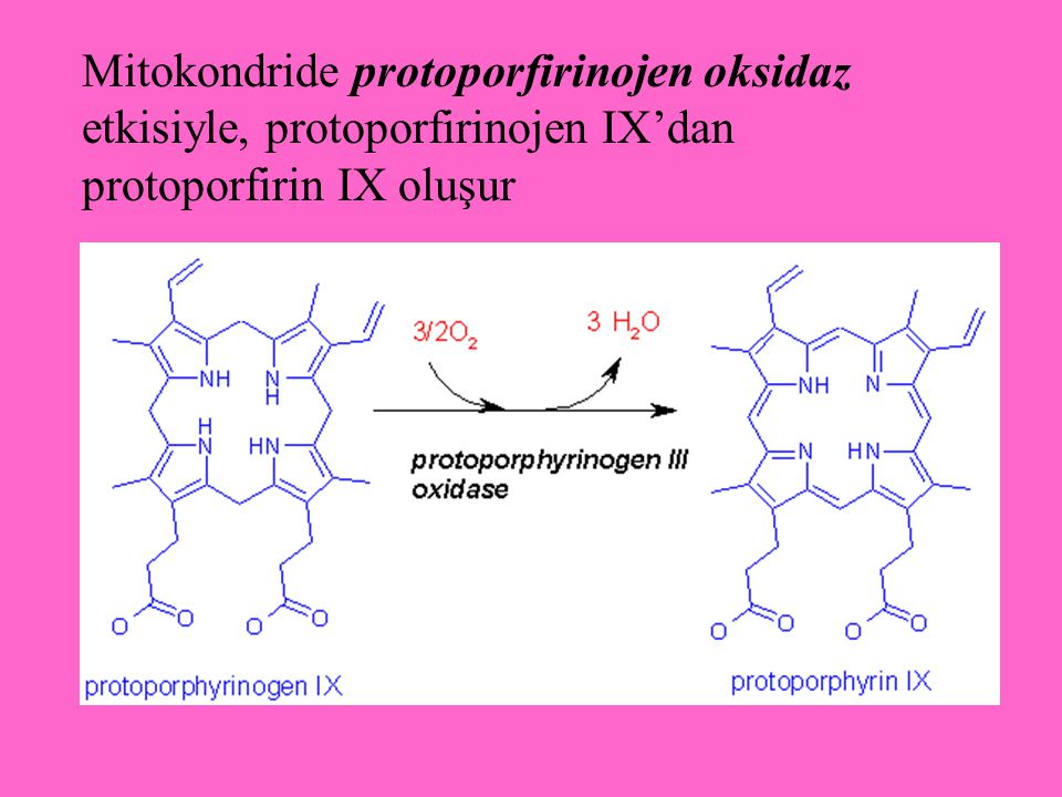 Mitokondride protoporfirinojen oksidaz etkisiyle, protoporfirinojen IX'dan protoporfirin IX oluşur