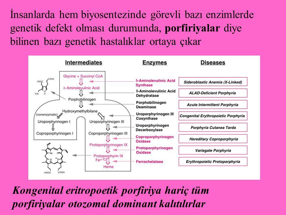 İnsanlarda hem biyosentezinde görevli bazı enzimlerde genetik defekt olması durumunda, porfiriyalar diye bilinen bazı genetik hastalıklar ortaya çıkar