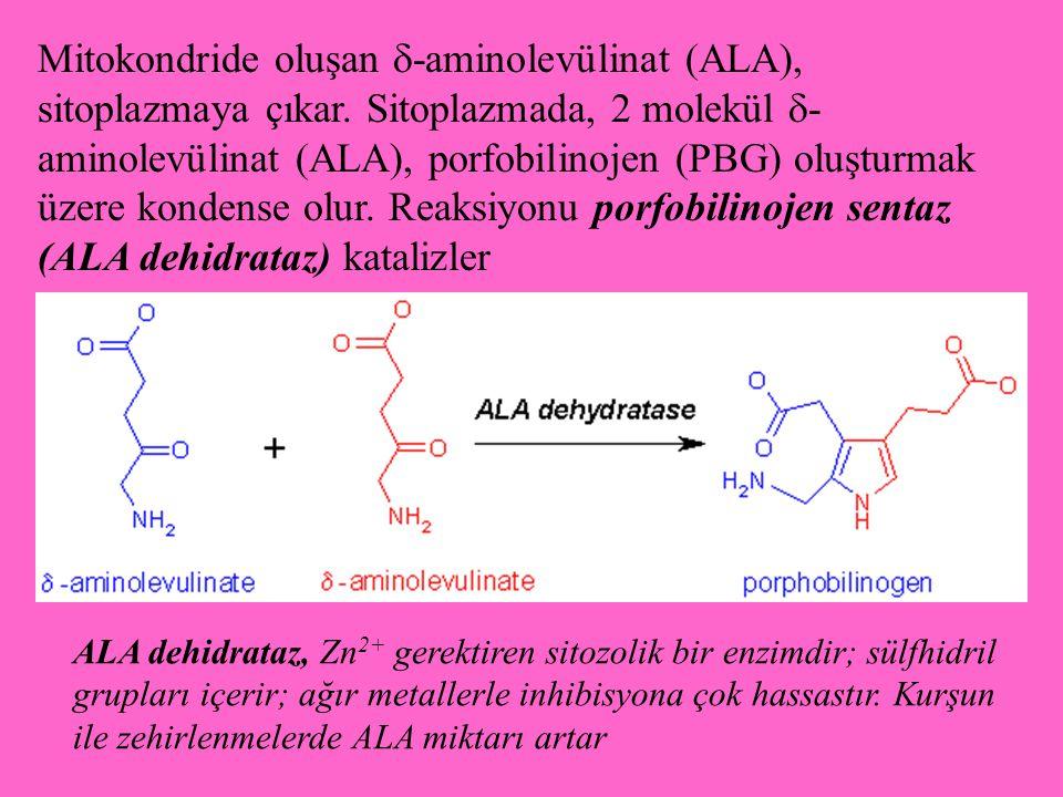 Mitokondride oluşan -aminolevülinat (ALA), sitoplazmaya çıkar