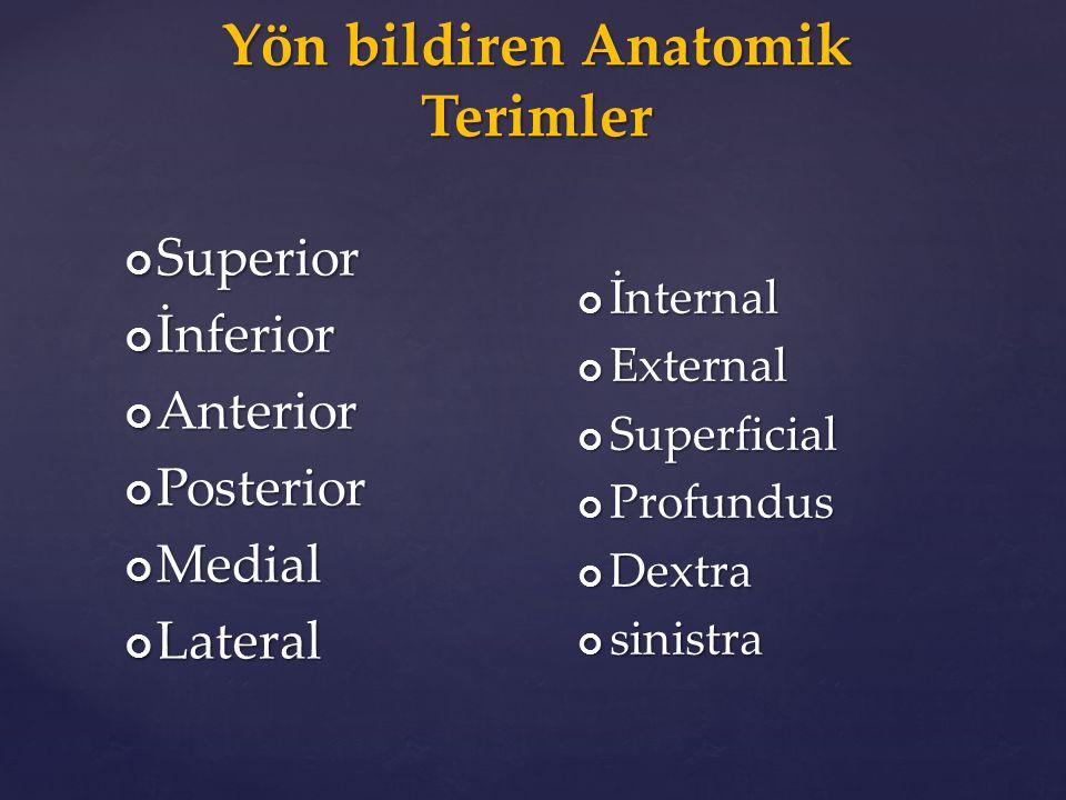 Yön bildiren Anatomik Terimler