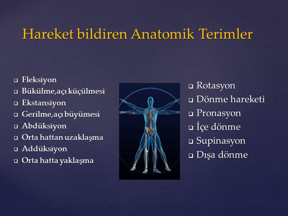 Hareket bildiren Anatomik Terimler