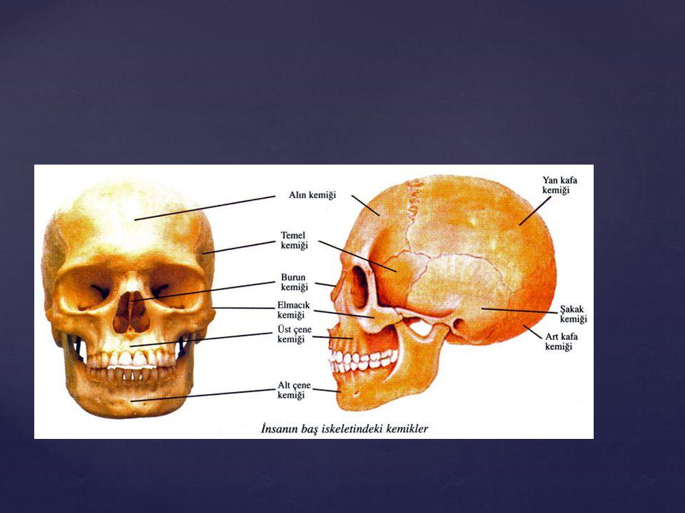 HAREKET SİSTEMİ Anatomik terimler