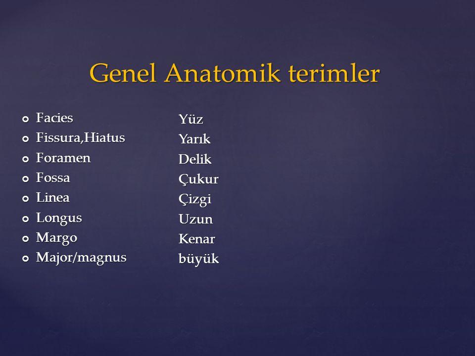 Genel Anatomik terimler
