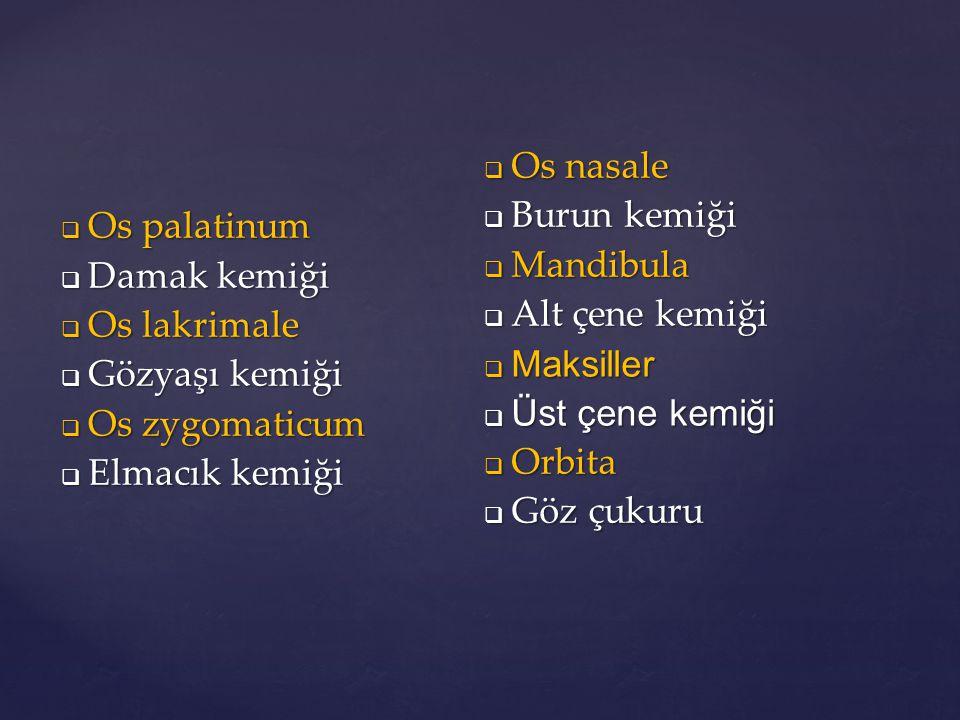 Os palatinum Damak kemiği. Os lakrimale. Gözyaşı kemiği. Os zygomaticum. Elmacık kemiği. Os nasale.