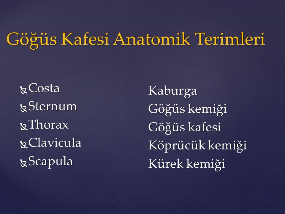 Göğüs Kafesi Anatomik Terimleri