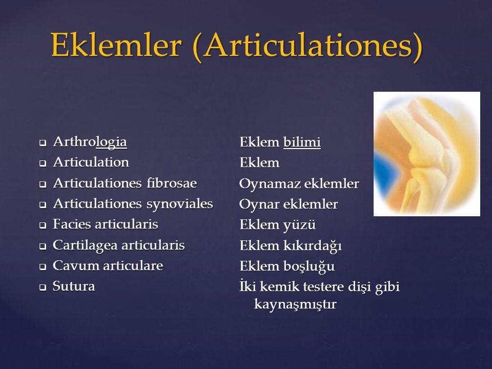 Eklemler (Articulationes)