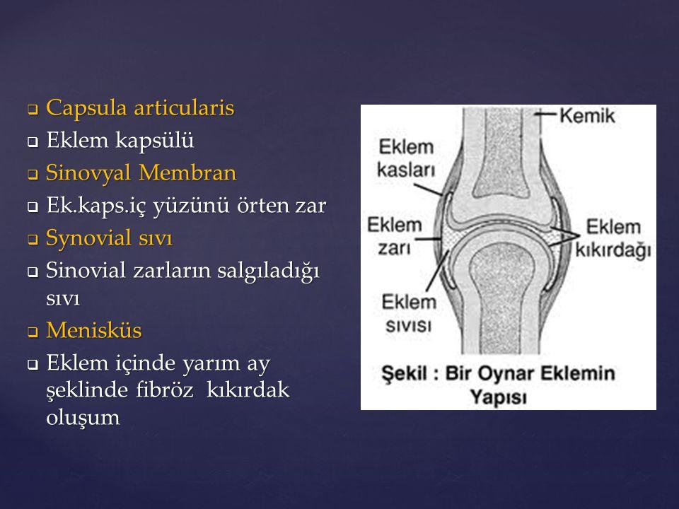 Capsula articularis Eklem kapsülü. Sinovyal Membran. Ek.kaps.iç yüzünü örten zar. Synovial sıvı.