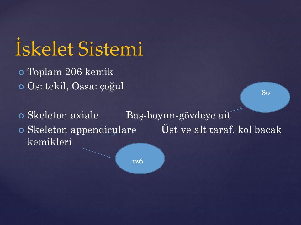 İskelet Sistemi Toplam 206 kemik Os: tekil, Ossa: çoğul