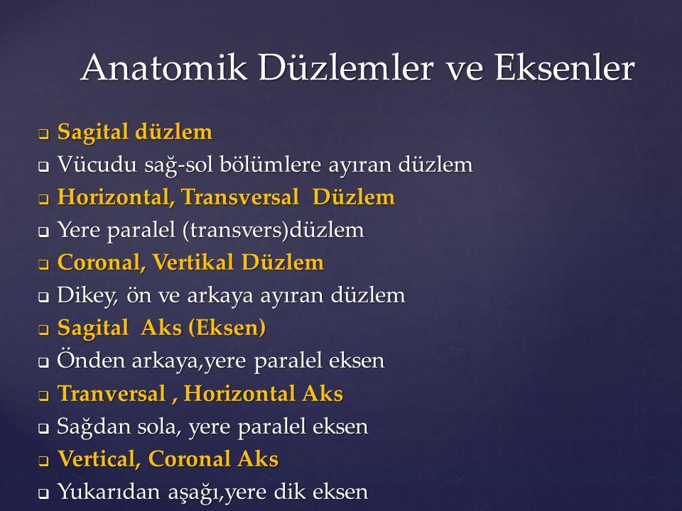 Anatomik Düzlemler ve Eksenler