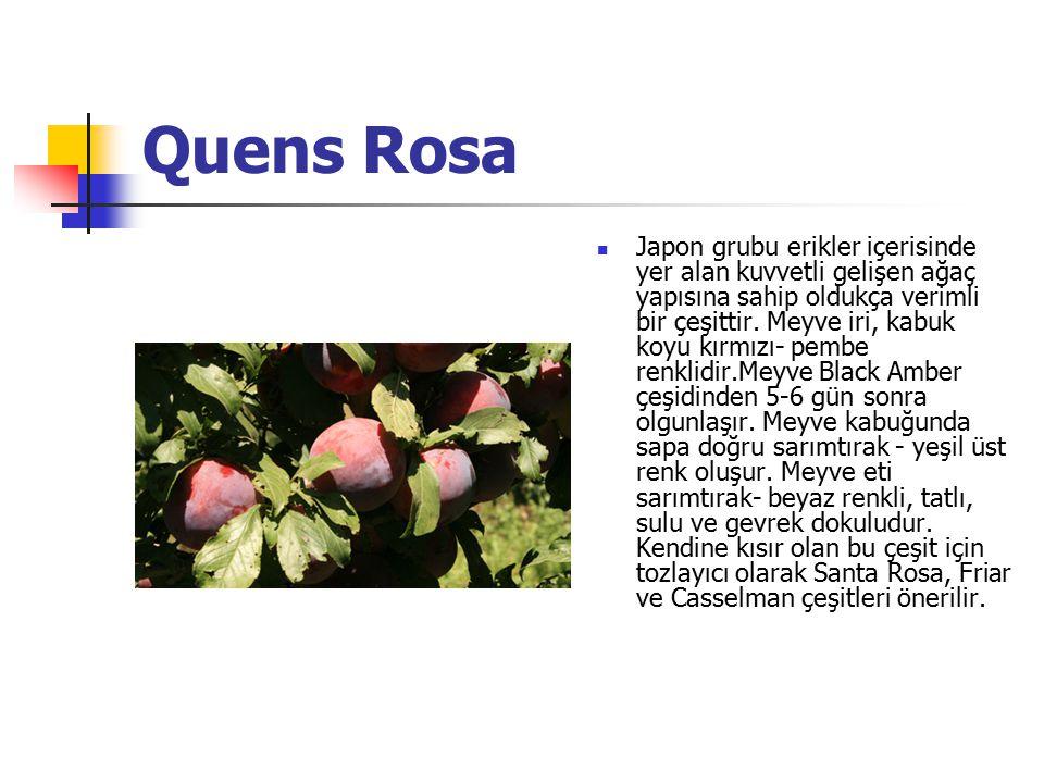 Quens Rosa