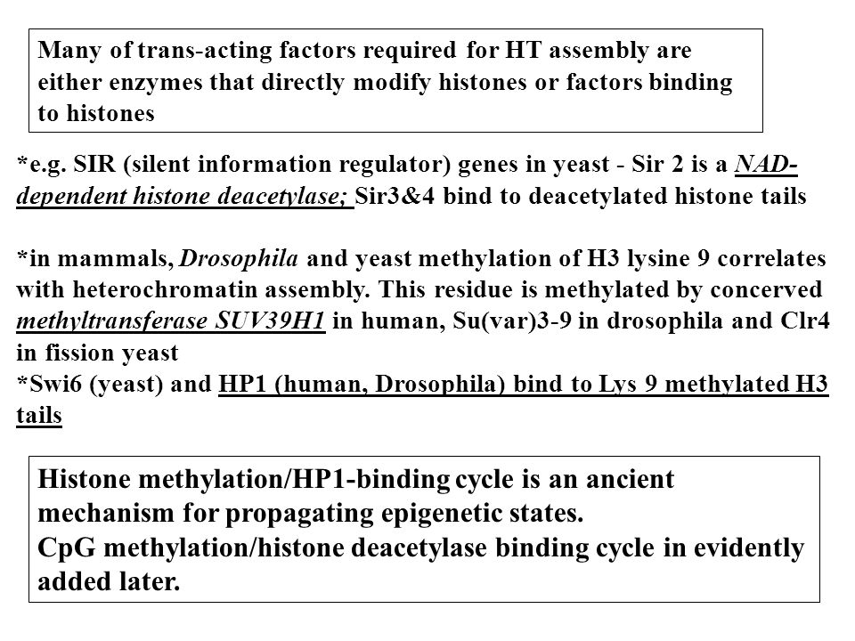 Many of trans-acting factors required for HT assembly are either enzymes that directly modify histones or factors binding to histones