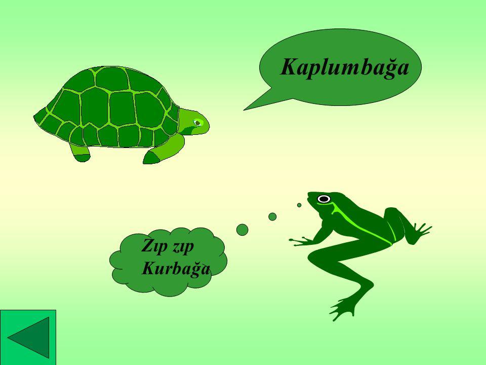 Kaplumbağa Zıp zıp Kurbağa
