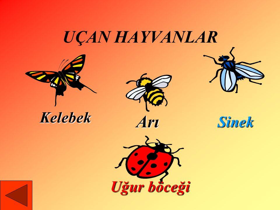 UÇAN HAYVANLAR Kelebek Arı Sinek Uğur böceği