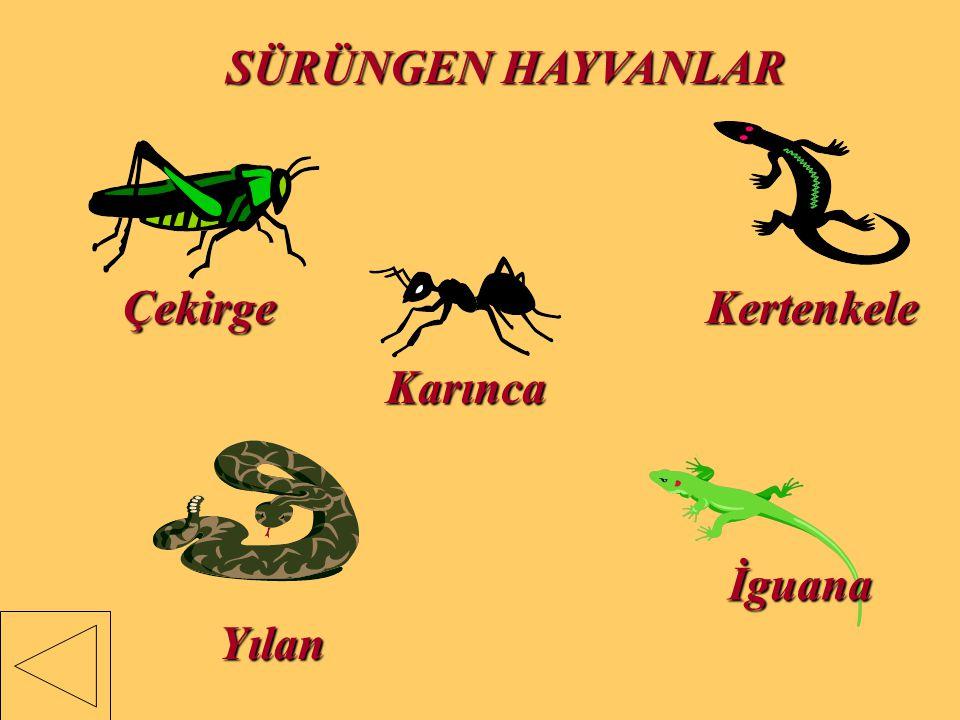 SÜRÜNGEN HAYVANLAR Çekirge Kertenkele Karınca İguana Yılan