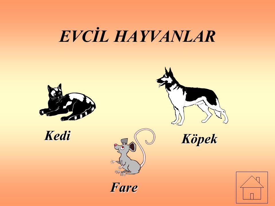 EVCİL HAYVANLAR Kedi Köpek Fare