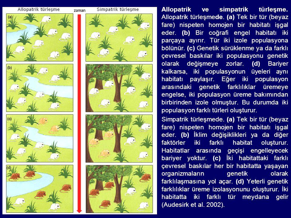 Allopatrik ve simpatrik türleşme. Allopatrik türleşmede