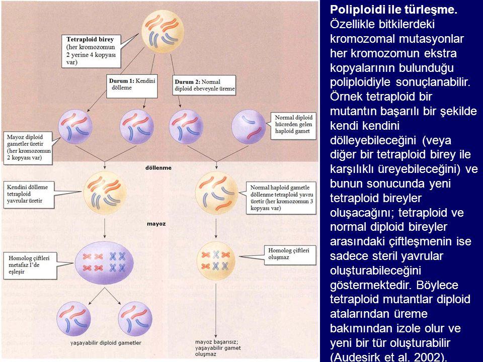 Poliploidi ile türleşme
