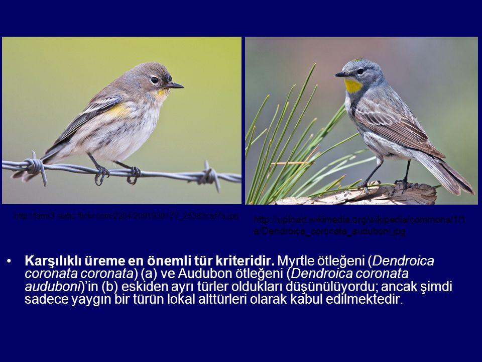 http://farm3.static.flickr.com/2204/2091939177_25383caf7a.jpg http://upload.wikimedia.org/wikipedia/commons/1/1e/Dendroica_coronata_auduboni.jpg.