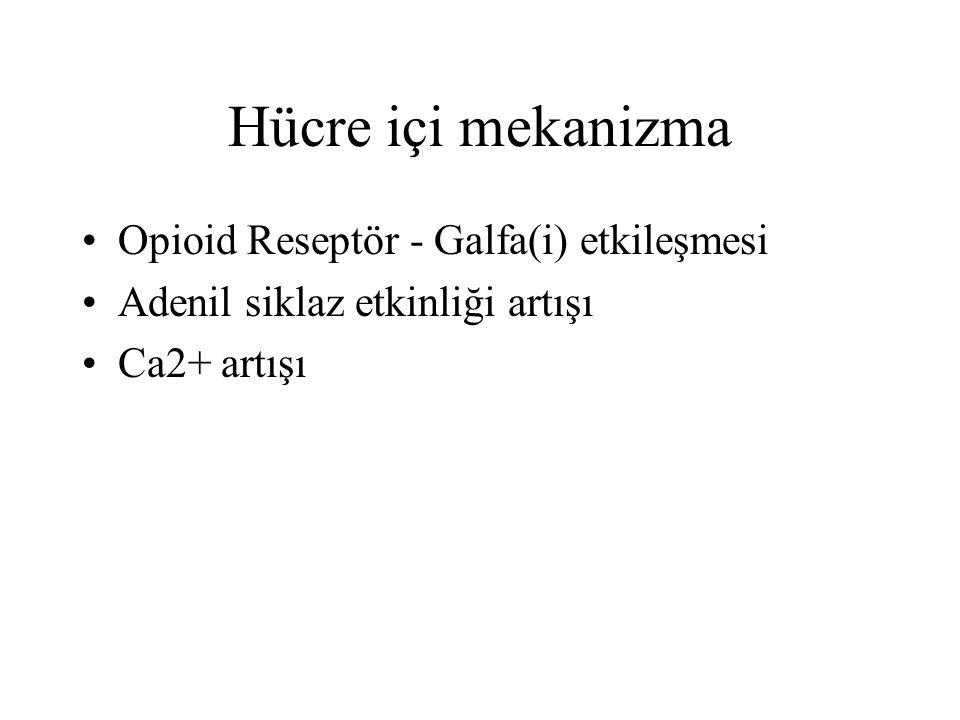 Hücre içi mekanizma Opioid Reseptör - Galfa(i) etkileşmesi