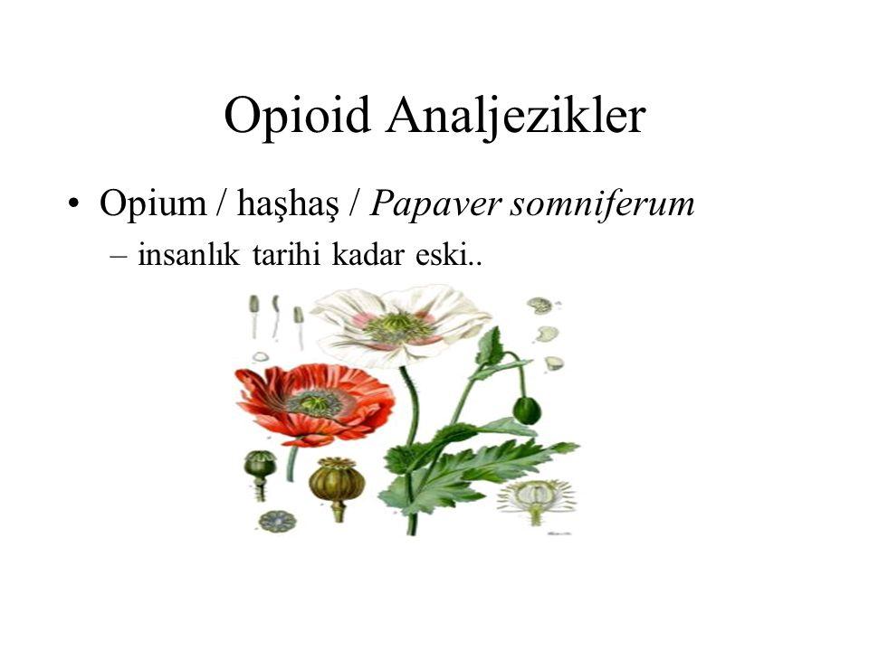 Opioid Analjezikler Opium / haşhaş / Papaver somniferum