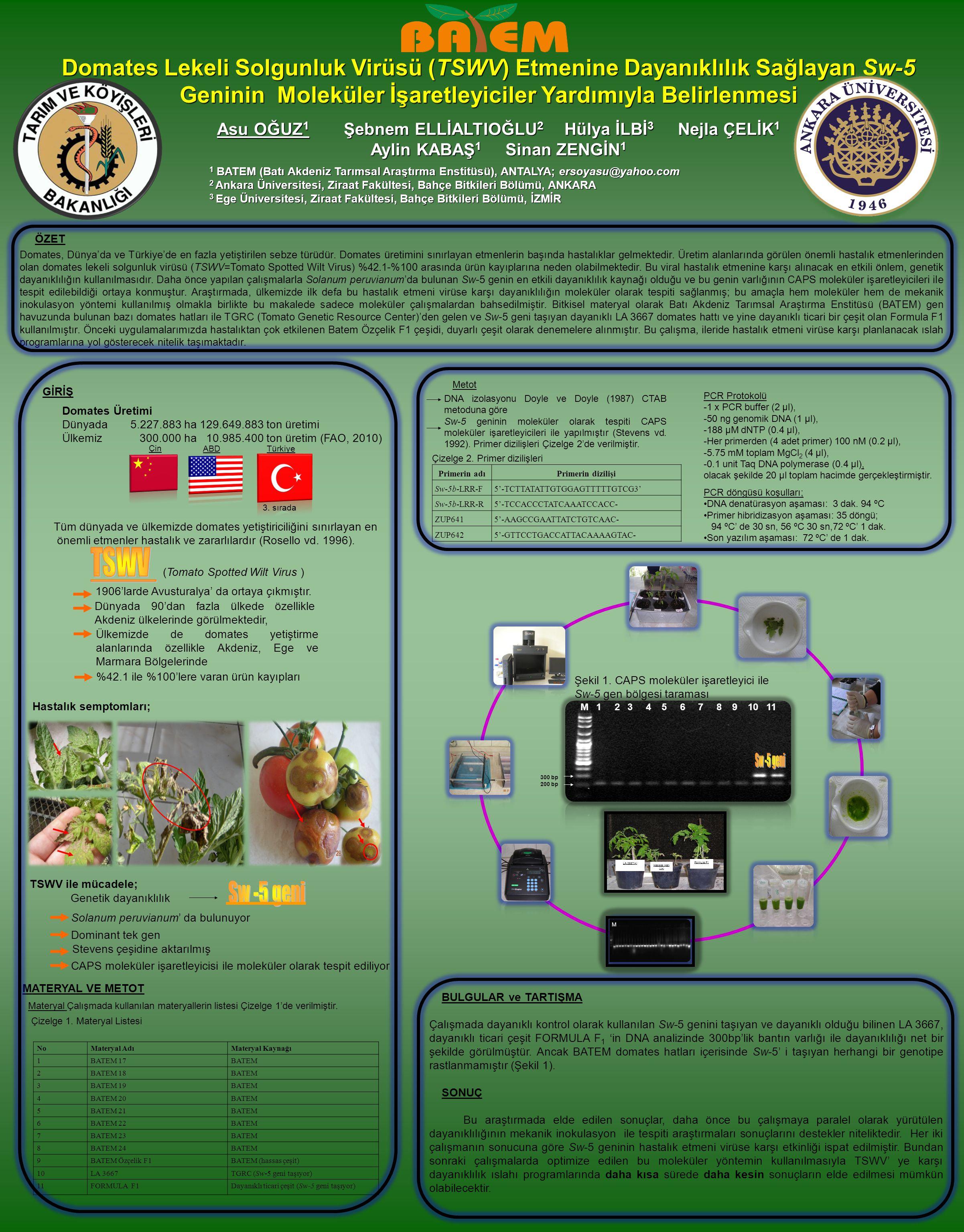 Domates Lekeli Solgunluk Virüsü (TSWV) Etmenine Dayanıklılık Sağlayan Sw-5 Geninin Moleküler İşaretleyiciler Yardımıyla Belirlenmesi