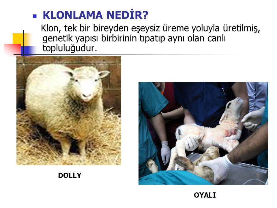 KLONLAMA NEDİR Klon, tek bir bireyden eşeysiz üreme yoluyla üretilmiş, genetik yapısı birbirinin tıpatıp aynı olan canlı topluluğudur.