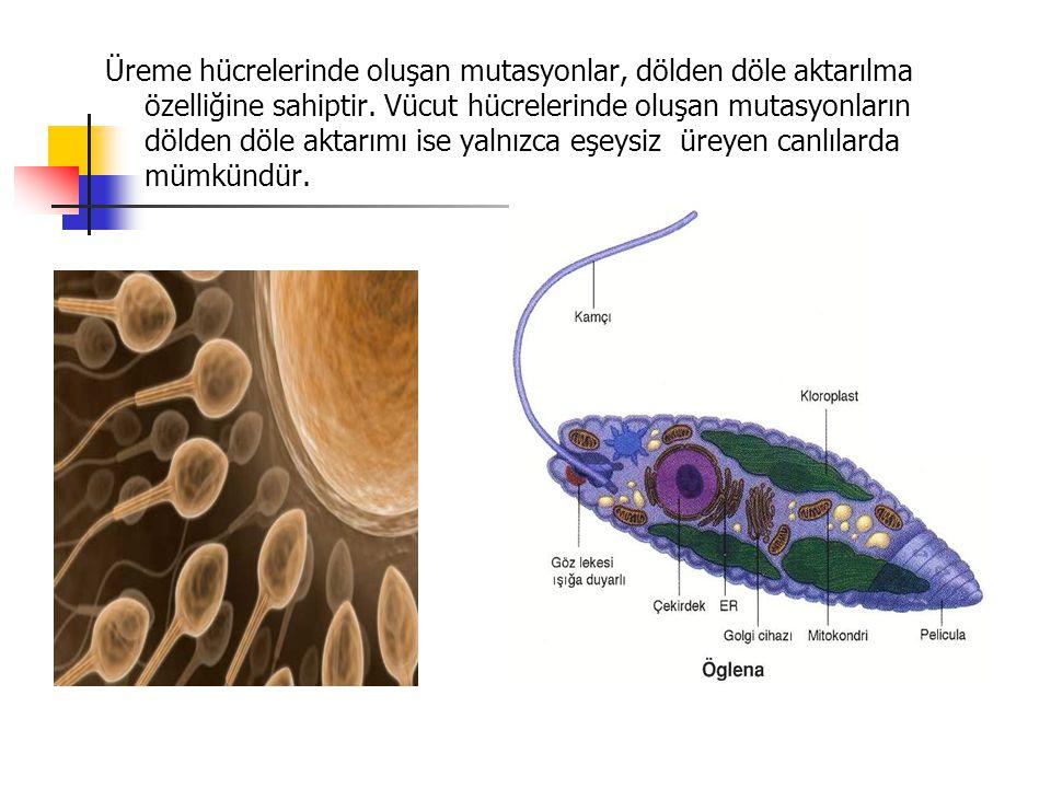 Üreme hücrelerinde oluşan mutasyonlar, dölden döle aktarılma özelliğine sahiptir.