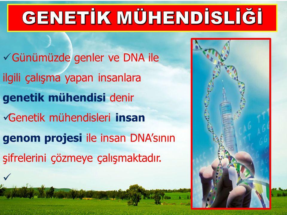 GENETİK MÜHENDİSLİĞİ Günümüzde genler ve DNA ile ilgili çalışma yapan insanlara genetik mühendisi denir.