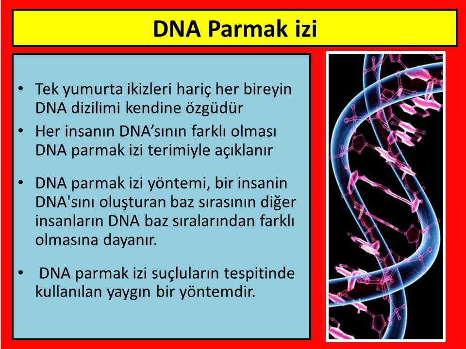 DNA Parmak izi Tek yumurta ikizleri hariç her bireyin DNA dizilimi kendine özgüdür.