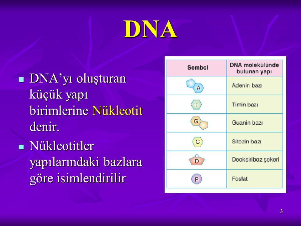 DNA DNA'yı oluşturan küçük yapı birimlerine Nükleotit denir.