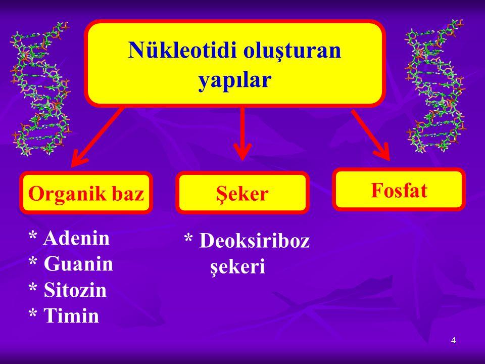 Nükleotidi oluşturan yapılar