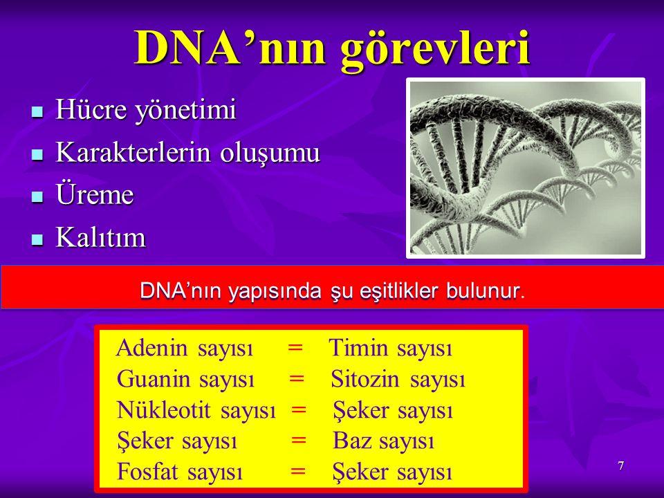 DNA'nın yapısında şu eşitlikler bulunur.