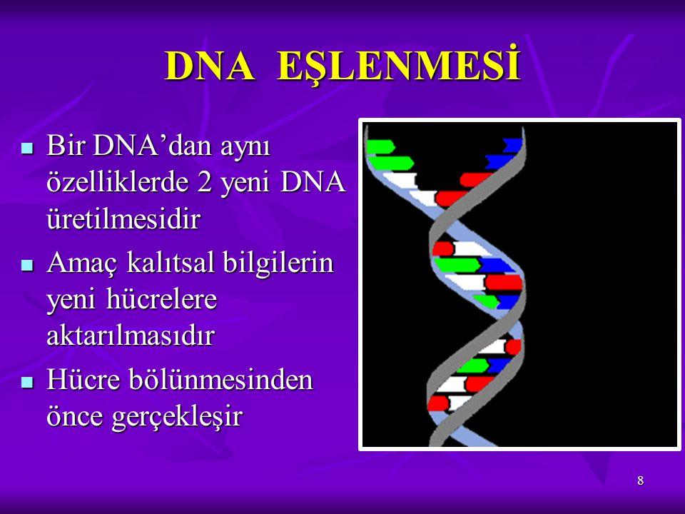 DNA EŞLENMESİ Bir DNA'dan aynı özelliklerde 2 yeni DNA üretilmesidir