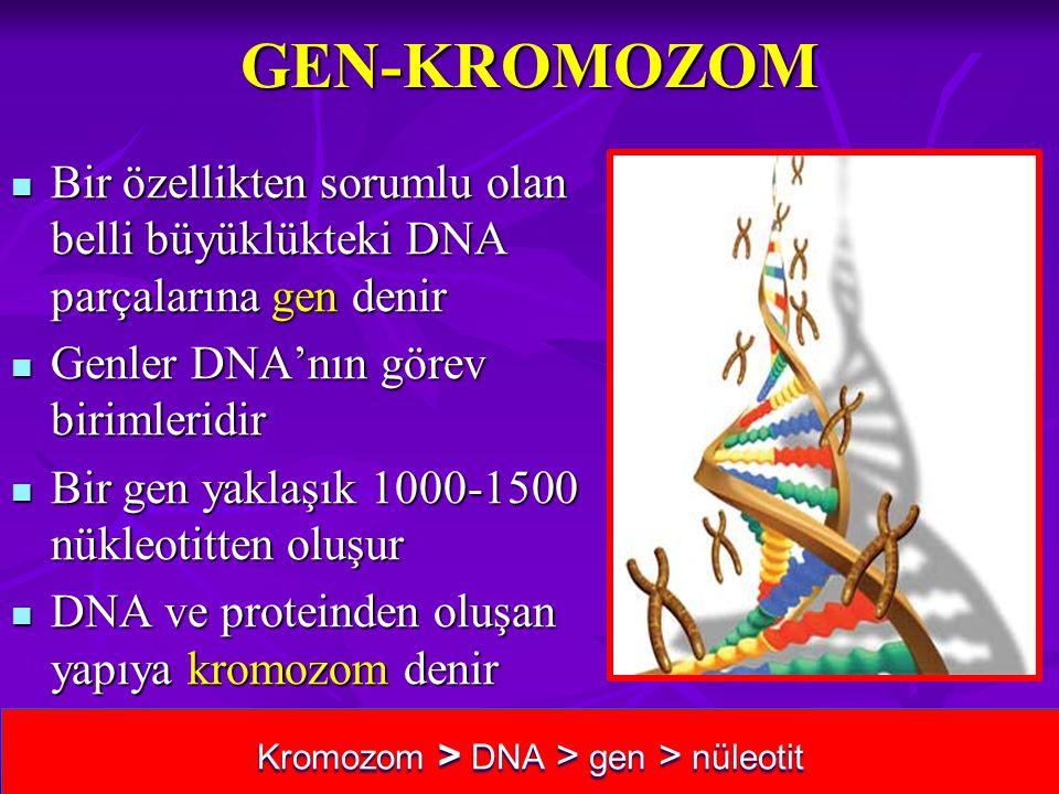 Kromozom > DNA > gen > nüleotit