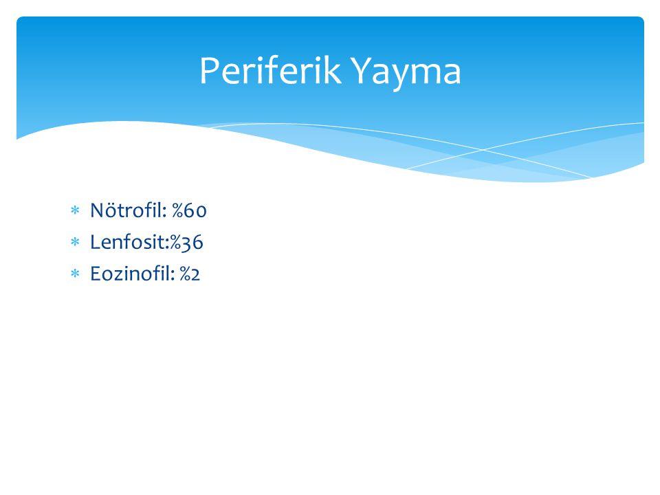 Periferik Yayma Nötrofil: %60 Lenfosit:%36 Eozinofil: %2