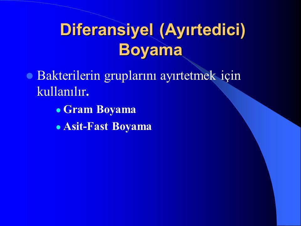 Diferansiyel (Ayırtedici) Boyama