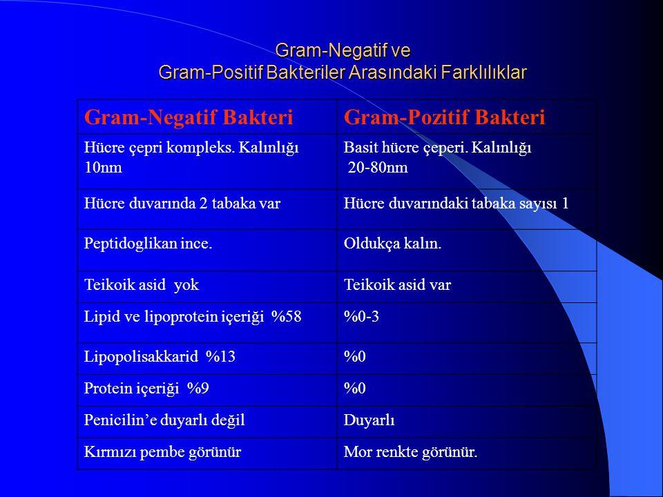 Gram-Negatif ve Gram-Positif Bakteriler Arasındaki Farklılıklar