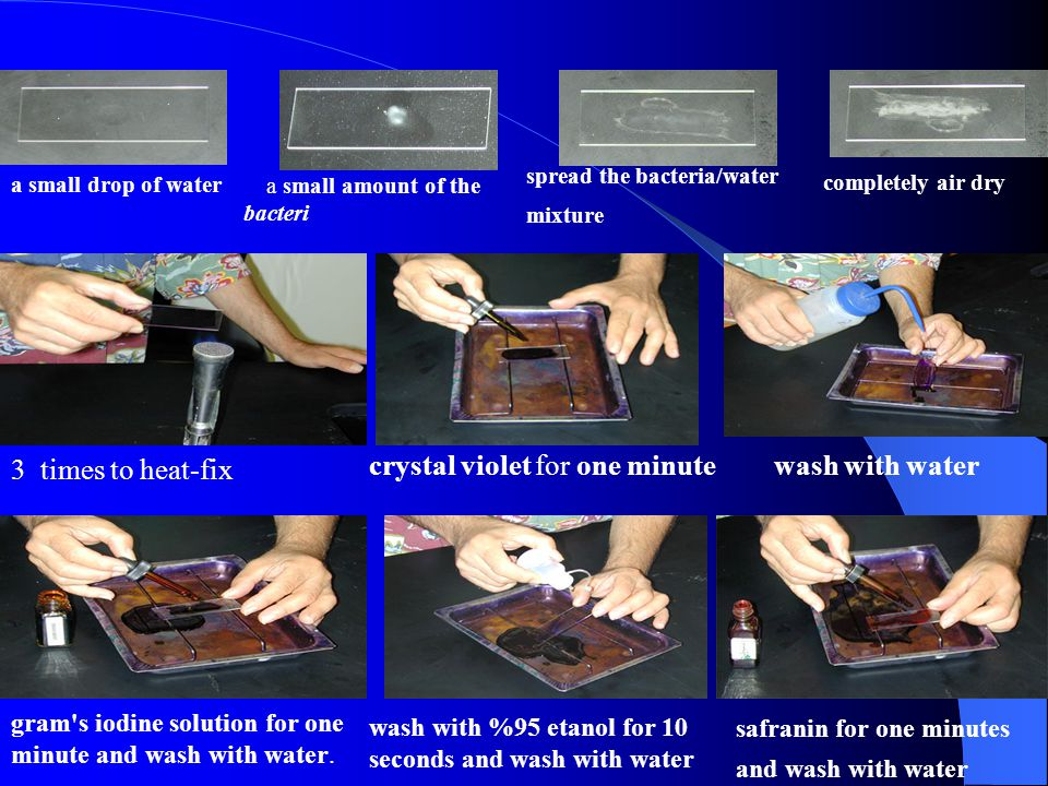 crystal violet for one minute wash with water