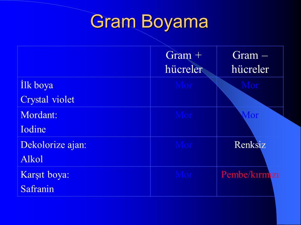 Gram Boyama Gram + hücreler Gram – hücreler İlk boya Crystal violet
